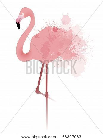 Vector illustration of pink flamingo with watercolor splatter and splash