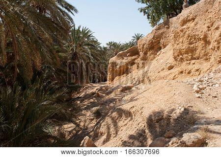 Oasis in the sunny Sahara desert, Tunisia