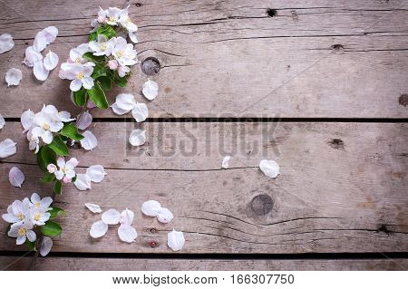 Tender spring apple tree flowers on aged vintage wooden background. Selective focus. Place for text. Top view. Flat lay.