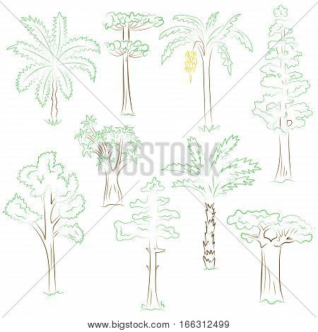 Hand Drawn Set of Green Trees. Doodle Drawings of Palms Sequoia Aloe Acacia Ceiba in Sketch Style. Vector Illustration.