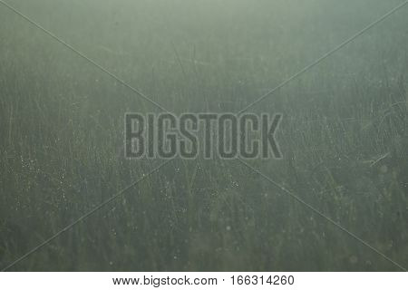picture view of tropical grass flower in nature field