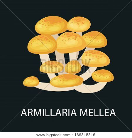 Armillaria mellea isolated, Wild Foraged Mushroom, Vector isolated edible natural mushrooms in nature set, organic vegetable food collection.