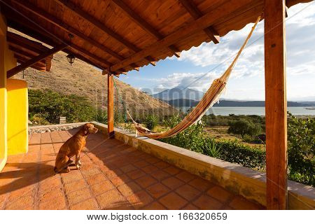 dog sitting on patio in the sunset light with a hammock and volcano in the background