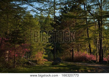 Scenic pine trees on the shore of lake