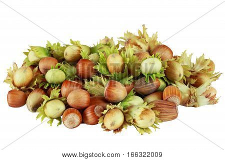 handful of hazelnuts on a white background
