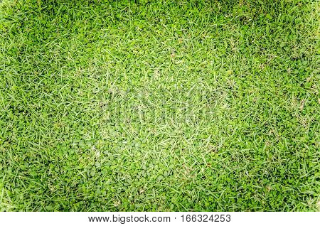 Photo texture of green grass for the nature background
