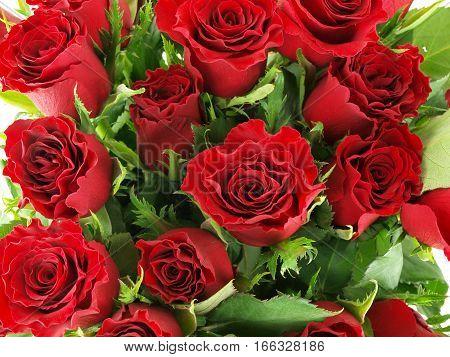 Background -  Rose Bouquet