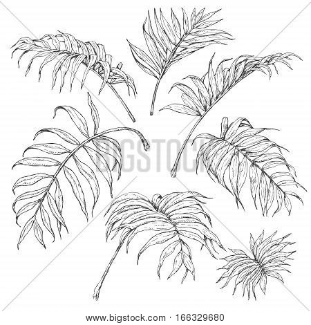 Hand drawn branches and leaves of tropical plants. Palm fronds sketch.