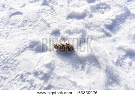 Fir Cone ni the Snow. Winter. Nature
