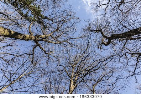 Treetop In The Winter Forest