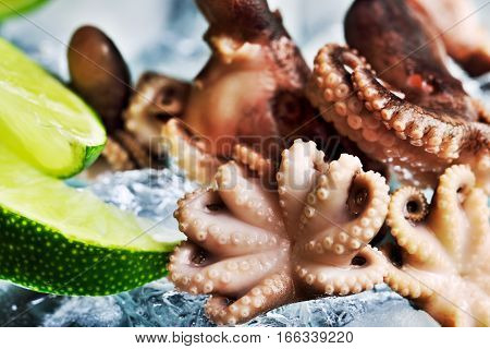 Front View A Lot Of Small Octopus And Slices Of Lime On The Piece Of Ice. Horizontal