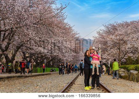 JINHAE-KOREA: MARCH 302016: Spring Cherry blossom festival at Gyeonghwa Station, Jinhae, South Korea