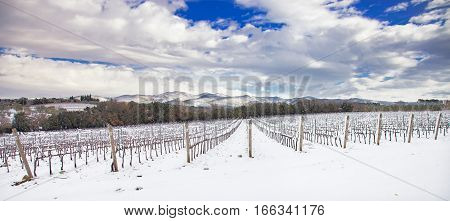 Vineyards rows covered by snow in winter. Chianti countryside Florence Tuscany region Italy
