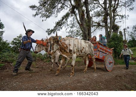 May 22 2016 Florencia Costa Rica: local farmer in front of a colourful carriage pulled by bovines