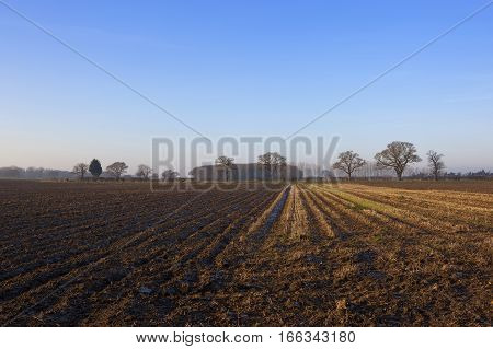 Straw Stubble And Plow Soil