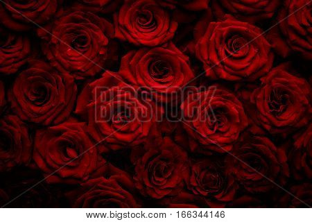 Texture of beautiful red roses. Romantic. Gift