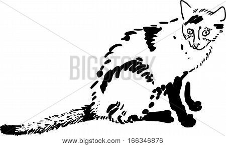 Vector hand drawn illustration of funny cat