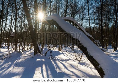Winter landscape at Rotes Moor Hesse Germany