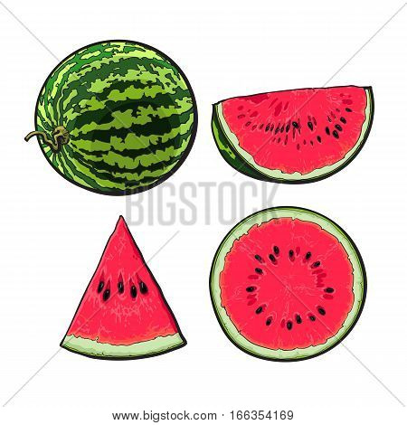 Whole, half, quarter and slice of ripe watermelon, sketch style vector illustration isolated on white background. Realistic hand drawing of whole, half, quarter and piece of watermelon