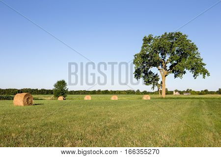 Golden hay bales in a green field under a large tree with a farm in the distant background. Copy space in sky if needed.