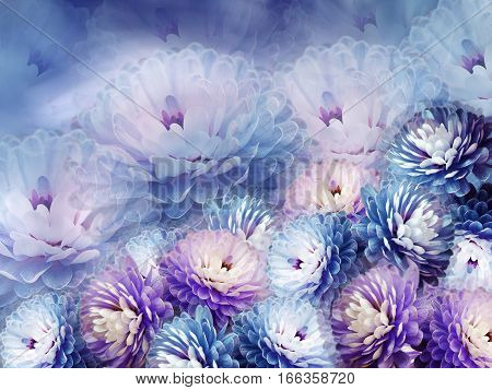 flowers chrysanthemum on blurry background. blue-violet background. floral collage. flower composition.