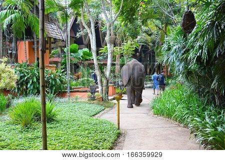 CHIANG RAI THAILAND - JANUARY 8 2017: A Mahout and his elephant walk through the Anantara Golden Triangle Elephant Camp a charity designed to help elephants and their handlers.