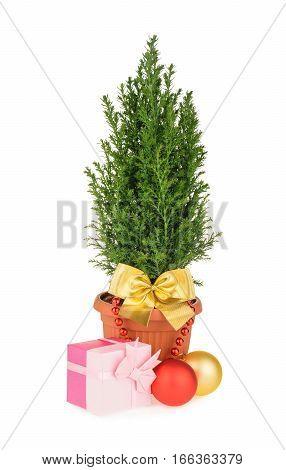 Christmas tree isolated on white background. close up
