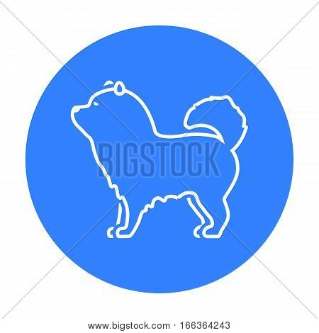 Chow-chow vector illustration icon in black design