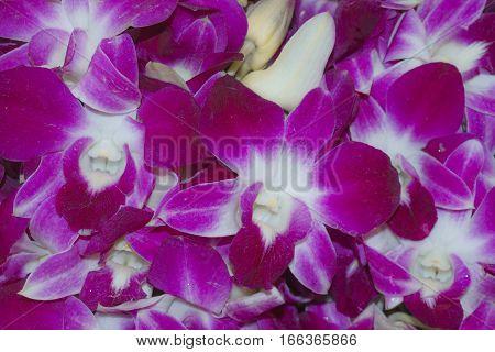 Pattern Purple Orchidaceae Orchid flower backgrounds textures