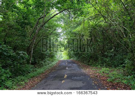 narrow road through the tropical forest in Panama