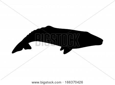 Silhouette of gray whale. Vector illustration isolated on white background