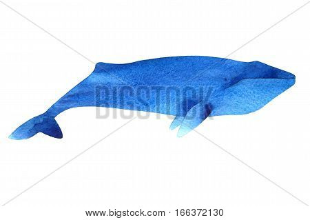 Watercolor sketch of blue whale. Illustration isolated on white background.