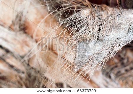 Palm bark, coir. Fibrous strands. Photo with selective focus.