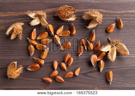 Beech nuts on a dark wooden background.