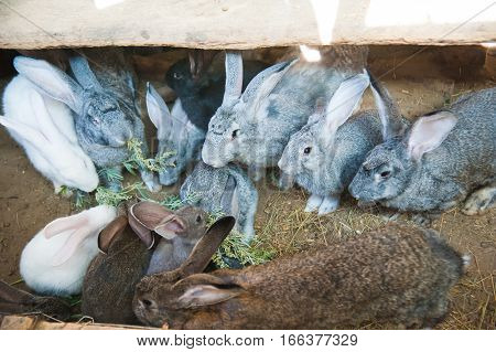 Rabbits are eating on animal farm in rabbit-hutch