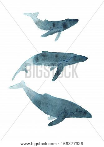 Watercolor sketch of humpback whale. Illustration isolated on white background.