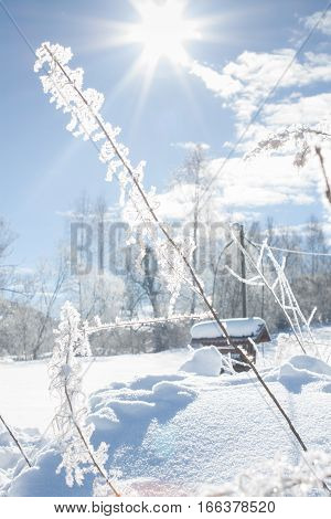 Beautiful Winter Landscape With Snow Covered Trees