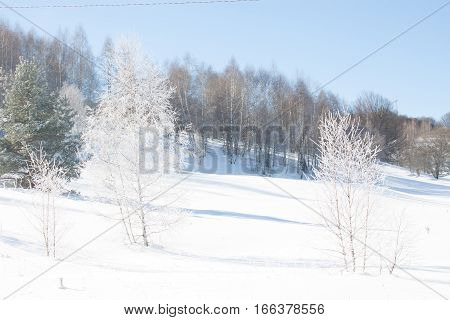 Winter Landscape With Snow.beautiful Winter Landscape With Snow Covered Trees