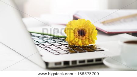 Working space or working place with laptop flowers and coffee on bright background. Horizontal with copy space. Spring or business concept.