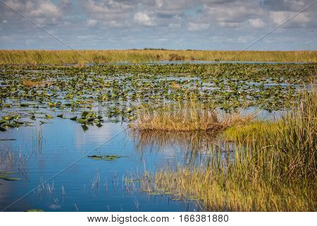Boat tour through the marsh in the Everglades National Park Florida USA