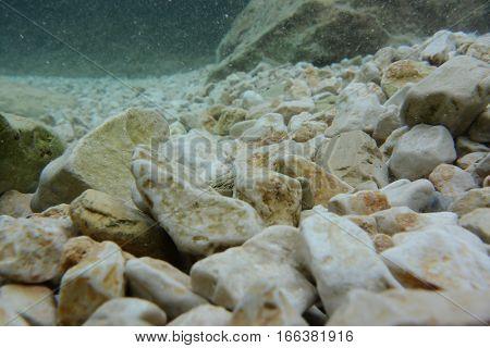 Stones And Cobblestones On Seafloor.