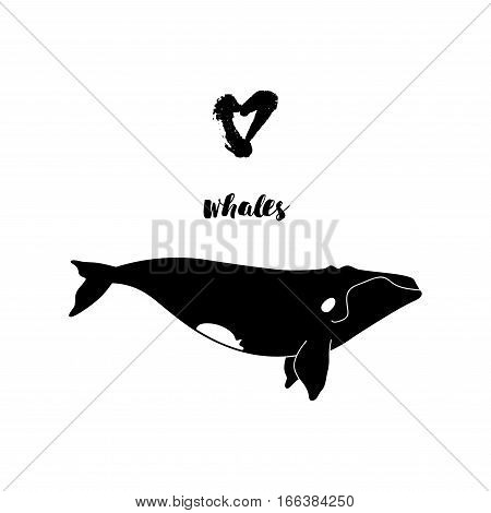 Vector Illustration Of Whale. Template Poster With Right Whale.
