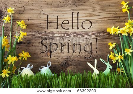 Wooden Background With English Text Hello Spring. Easter Decoration Like Easter Eggs And Easter Bunny. Yellow Spring Flower Narcisssus With Gras. Card For Seasons Greetings