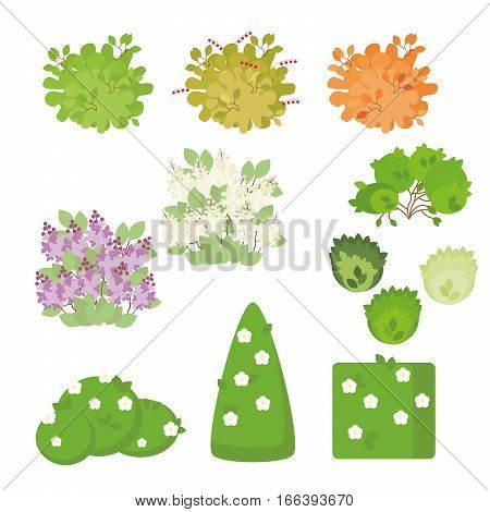 Set of outdoor plants and shrubs with flowers isolated on white background. Illustration in a flat style.