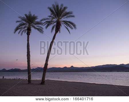 State beach with two palms during sunset.