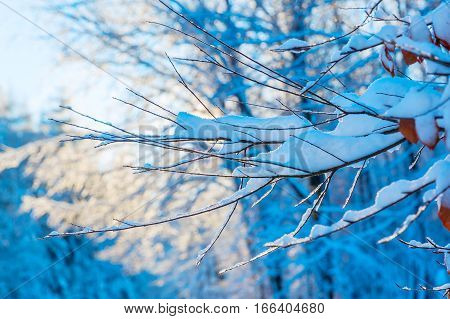 Snow Covered Branches In The Forest