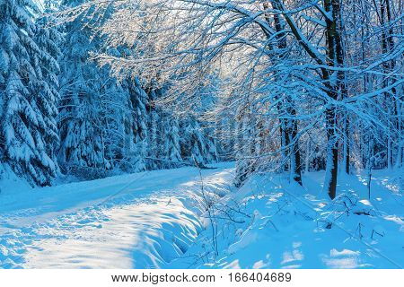 Path In A Snow Covered Forest