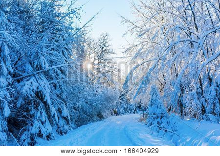 Forest Path With Snow Covered Trees