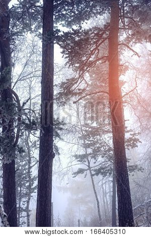 Fabulous Early Morning In The Foggy Forest