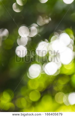 Image part of bokeh background series recorded in a forrest, showing diffuse blurred highlights of white, green and yellow.